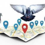 Google Pigeon y SEO Local