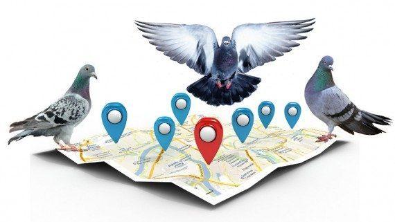 Google-Pigeon-paloma